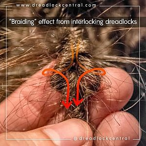 Example of braiding effect from interlocking dreads aka latch hooking dreads